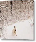 The Chase Metal Print by Cheryl Helms