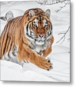 The Chase Is On Metal Print