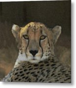 The Cheetah Metal Print