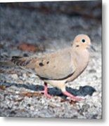 The Chipper Mourning Dove Metal Print