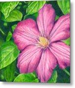 The Clematis Flower Metal Print