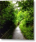 The Cliff Path At Lynton 4 Metal Print