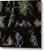 The Collection Of Lichens Metal Print