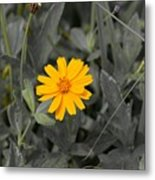 The Color Of  A Unike Flower Metal Print