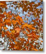 The Color Of Fall 1 Metal Print