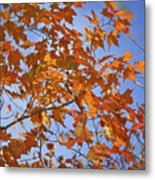The Color Of Fall 2 Metal Print