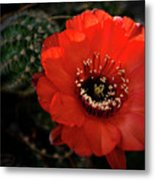 The Color Red Always Makes Smile Metal Print