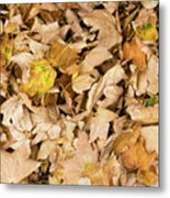 The Colors Of The Leaves In Autumn Metal Print