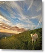 The Colours Of The Evening Metal Print by Angel  Tarantella