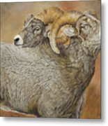The Conquest - Bighorn Sheep Metal Print