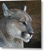 The Cougar Metal Print
