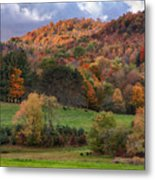 The Cows Are In The Dell  Metal Print