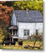 The Cows Came Home Metal Print