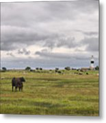 The Cows Of Ottenby 1 Metal Print