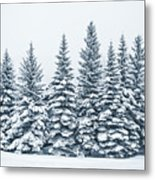 The Crown Of Winter Metal Print