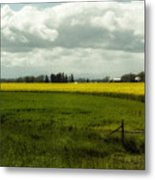 The Curve Of A Mustard Crop Metal Print