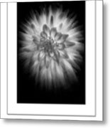 The Dahlia Bw Poster Metal Print
