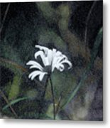 The Daisy Metal Print