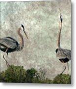 The Dance Of Life - Great Blue Herons In Mating Ritual - Digital Painting Metal Print