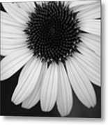 The Dark In The Light Metal Print