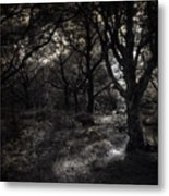 The Deep Forest Metal Print