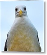 The Disapproving Seagull Metal Print