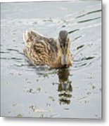 The Duck Metal Print