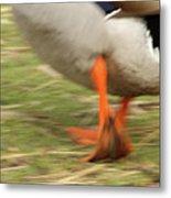 The Duck Strut Metal Print