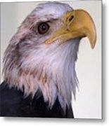 The Eagle Metal Print