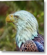 The Eagle Look Metal Print