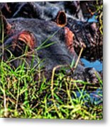 The Eating Machine Called A Hippo Metal Print