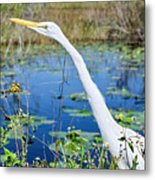The Egret And The Dragonfly Metal Print