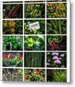 The Essential Thai Garden II Metal Print