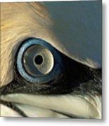 The Eye Of A Northern Gannet Metal Print