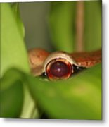 The Eye Of The Boa Metal Print