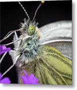 The Eye Of The Green-veined Butterfly. Metal Print