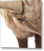 The Eye Of The Ram Metal Print