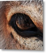 The Eye Of A Burro Metal Print