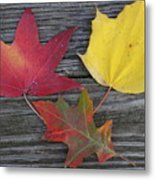 The Fallen Leaves Of Autumn Metal Print