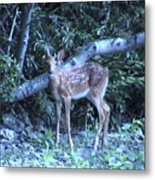 The Fawn II Metal Print