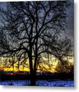 The Field Tree Hdr Metal Print