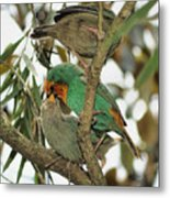 The Finch Family  Metal Print