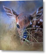 The First Fawn Metal Print
