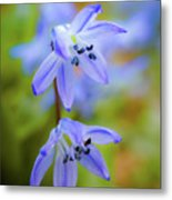 The First Spring Flowers Metal Print