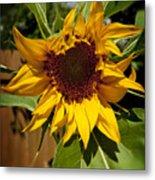 The First Sunflower Metal Print