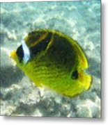 The Fish In The Ocean Metal Print