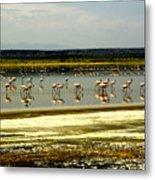 The Flamingoes Metal Print