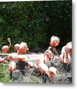 The Flamingos Metal Print