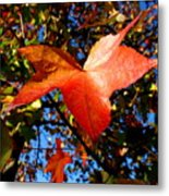 The Flavor Of Fall Metal Print