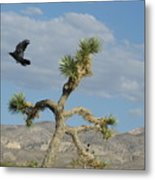The Flight Of Raven. Lucerne Valley. Metal Print
